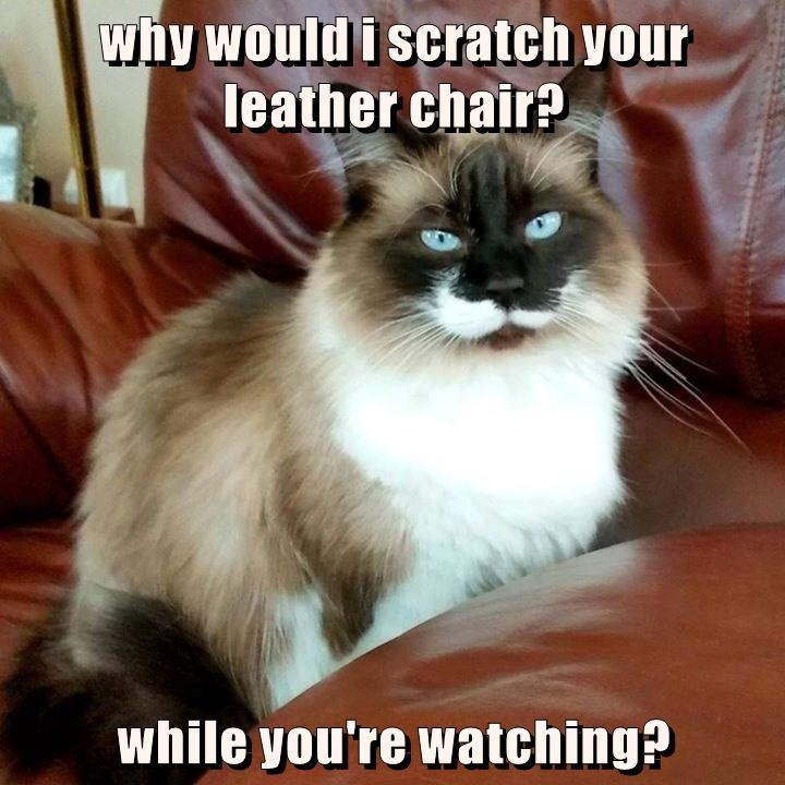 why would i scratch your leather chair?  while you're watching?