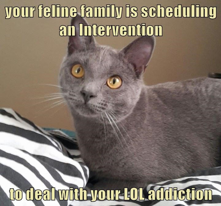 your feline family is scheduling an Intervention  to deal with your LOL addiction