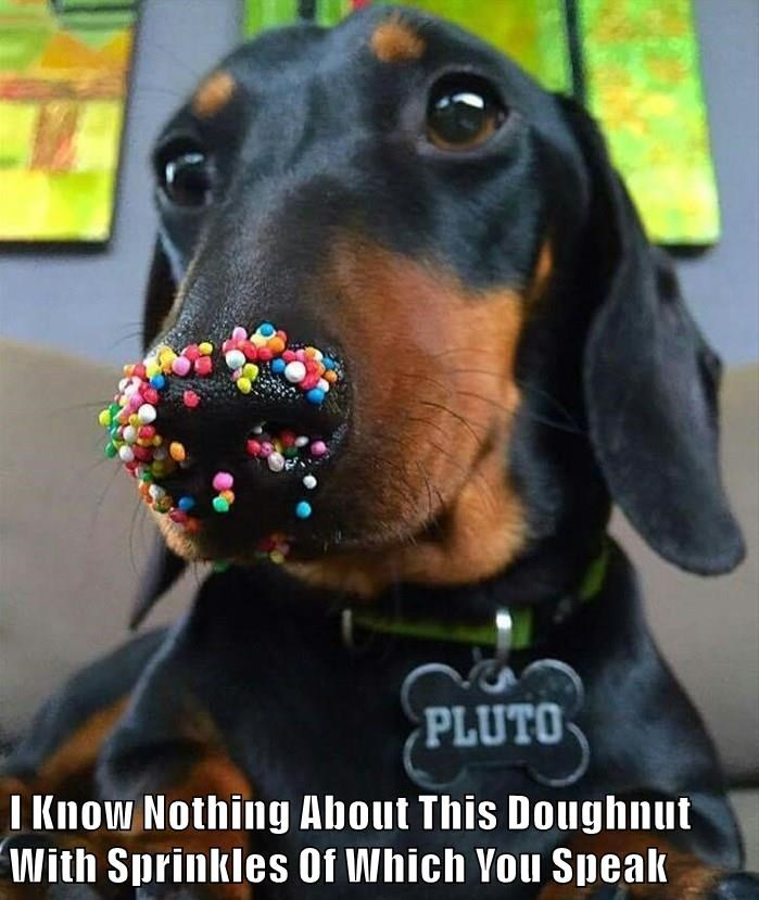 I Know Nothing About This Doughnut With Sprinkles Of Which You Speak