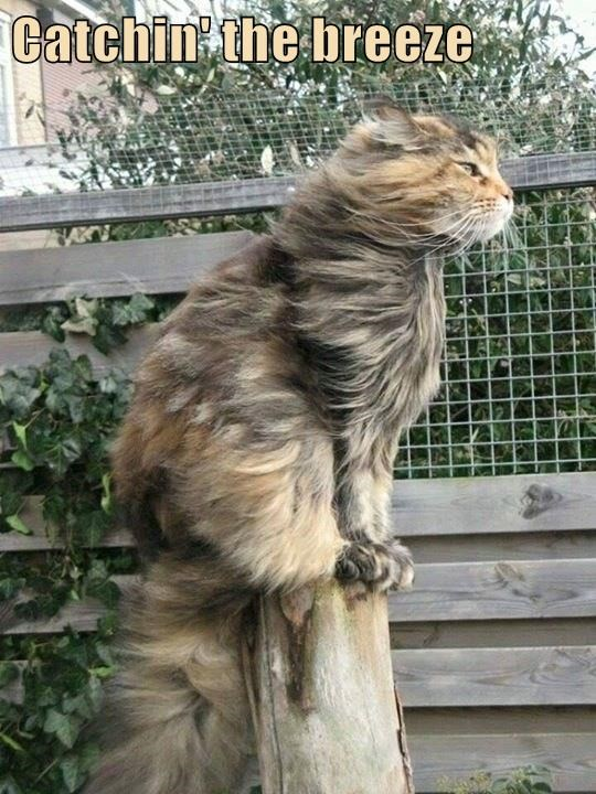 Catchin' the breeze