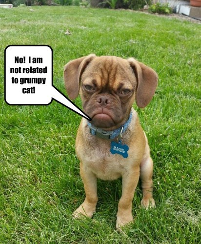 dogs captions cute grumpy - 8573566464