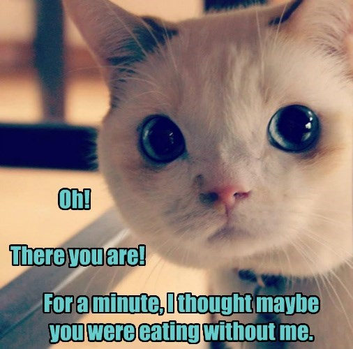 sneaky eating caption Cats funny - 8573570304