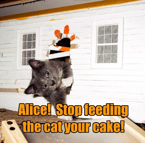 alice in wonderland fairy tail caption Cats funny - 8573643520