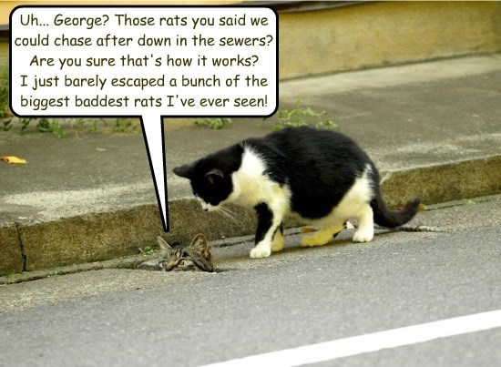 captions Cats funny sewers - 8573665792