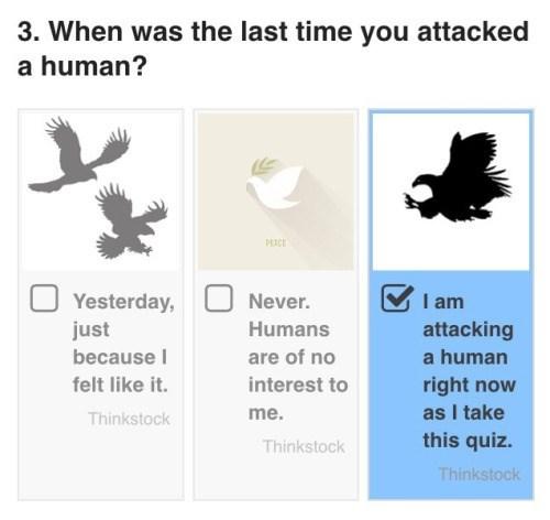 funny memes bird attack quiz