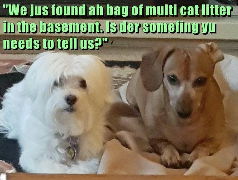 animals basement found box caption litter - 8573736960
