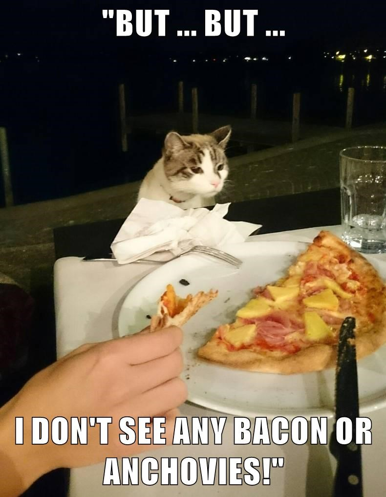 animals pizza caption Cats funny bacon - 8573745664