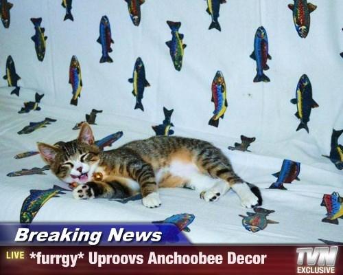 Breaking News - *furrgy* Uproovs Anchoobee Decor
