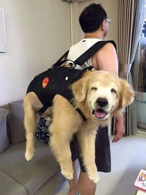 cute dogs image sure-ill-take-a-doggie-bag-for-the-road