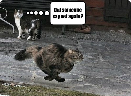 run captions cute vet Cats - 8573995008