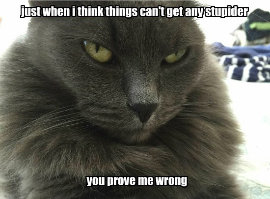 caption Cats funny stupid stupidity - 8574046208