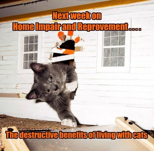 cat destructive home repair caption benefits - 8574056448