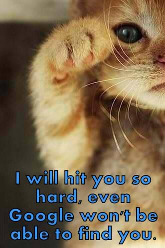 animals cat hard find hit caption cant google - 8574093056