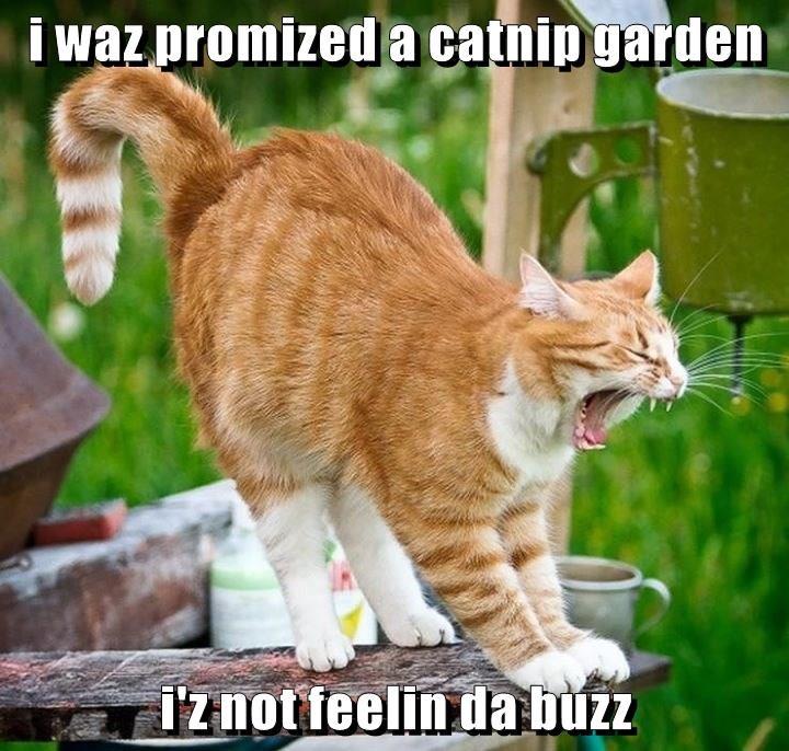 i waz promized a catnip garden  i'z not feelin da buzz