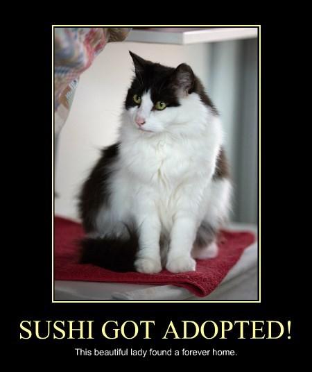 SUSHI GOT ADOPTED!
