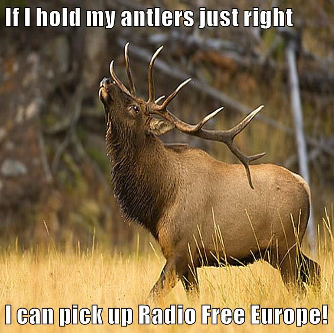animals antlers captions caribou funny - 8574244352