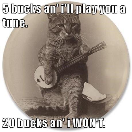 animals captions Cats funny - 8574280192