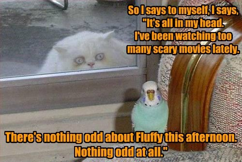 birds captions Cats funny - 8574303744