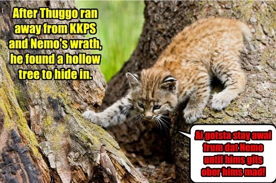 Thuggo Hides Out!