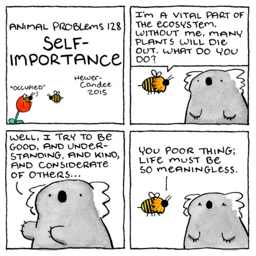 funny web comics koala self importance