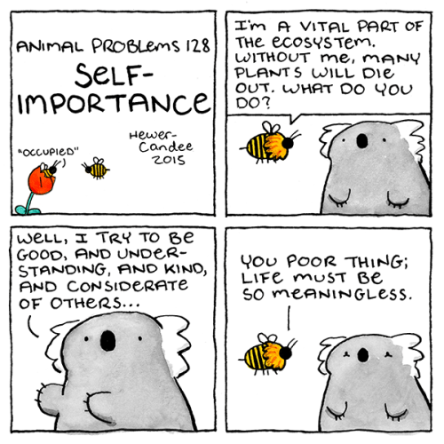 funny web comics koala self importance
