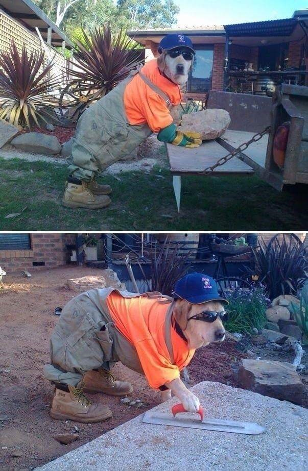 cute dogs costumes Best Contractor We've Ever Hired