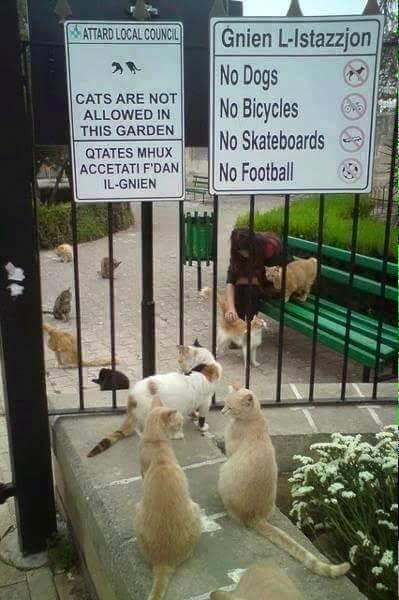 funny cats image Forget the Rules, We Can't Even READ the Rules!