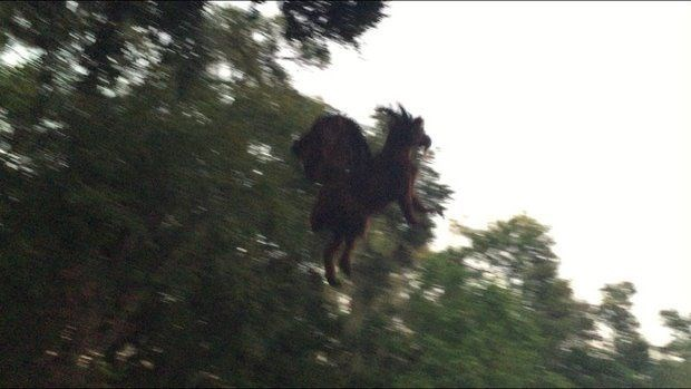 Discovery of the Day: Man Snaps Photo of Totally Real 'Jersey Devil'
