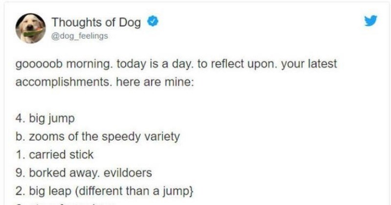 dogs twitter social media ridiculous funny animals - 8574469