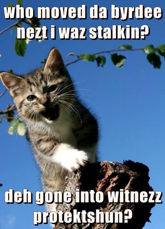 who moved da byrdee nezt i waz stalkin?  deh gone into witnezz protektshun?