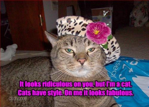 Because...Cat