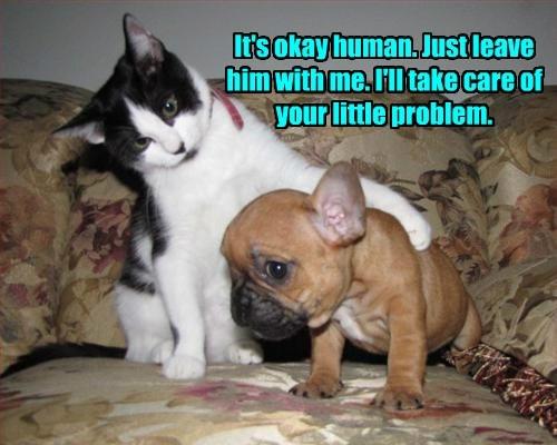 cat dogs problem little