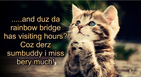 Missing our loved ones that went over the rainbow bridge.
