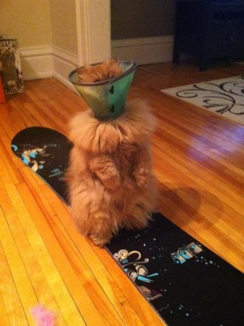 cats cone of shame image For Some Reason the Cone of Shame Doesn't Suit You