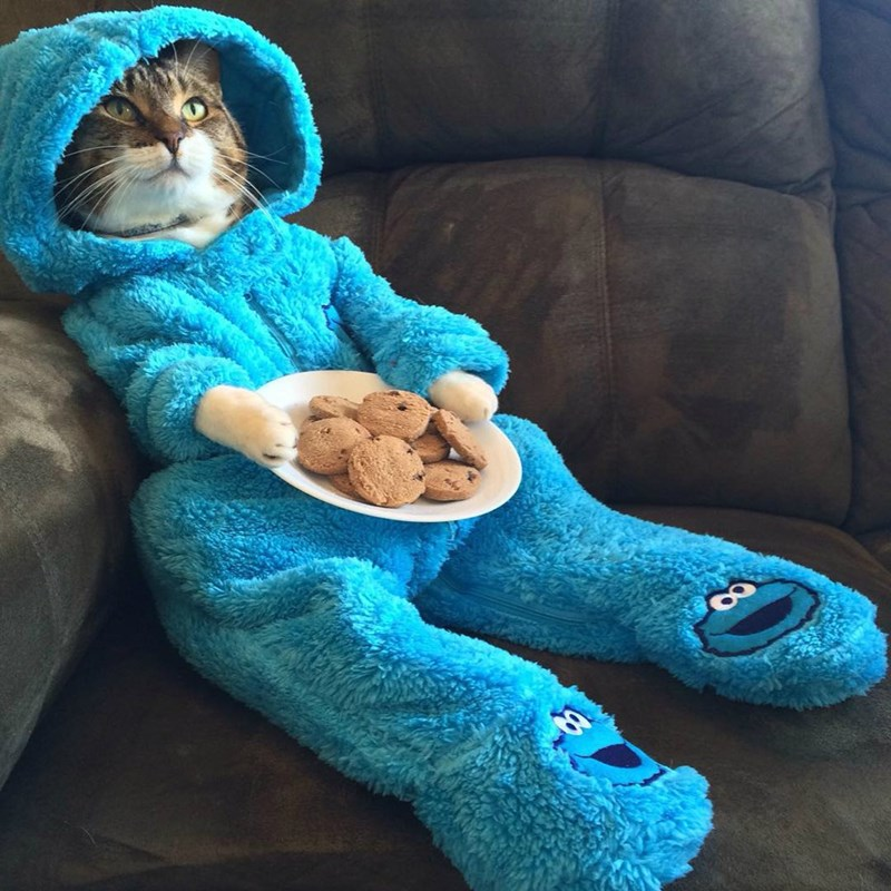 funny cats costume These Cookies Better Be Tuna Chip Like I Asked