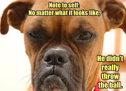 note to self dogs ball didnt really caption throw - 8574833152