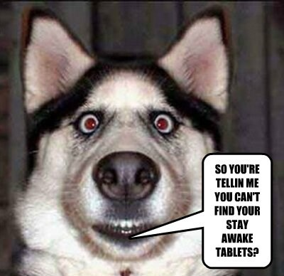 dogs stay tablets caption awake - 8574901248