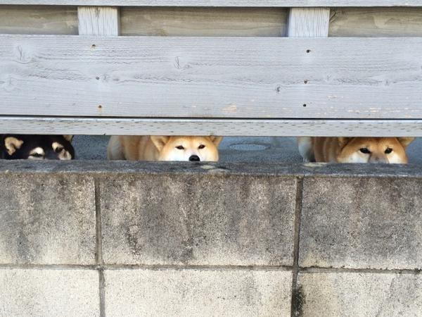 funny dogs hi hi hi