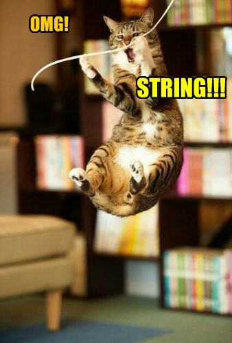 surprise string caption Cats funny