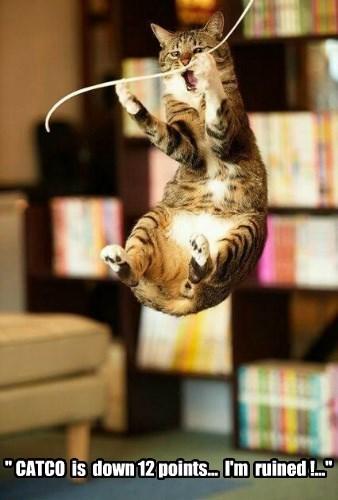 cat stocks ticker tape down ruined catco caption - 8575001344