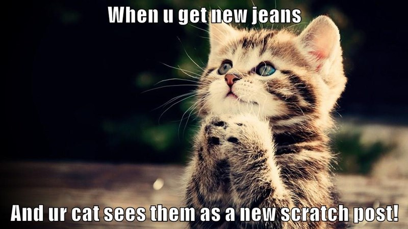 When u get new jeans And ur cat sees them as a new scratch post!