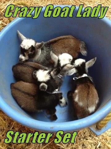 Crazy Goat Lady   Starter Set