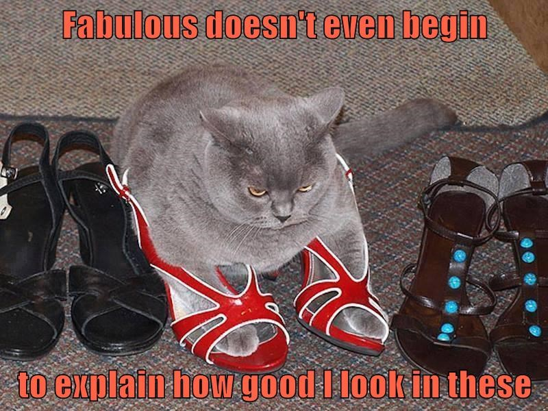 animals cat fabulous look explain good caption