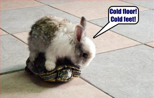 animals,bunny,funny,turtle