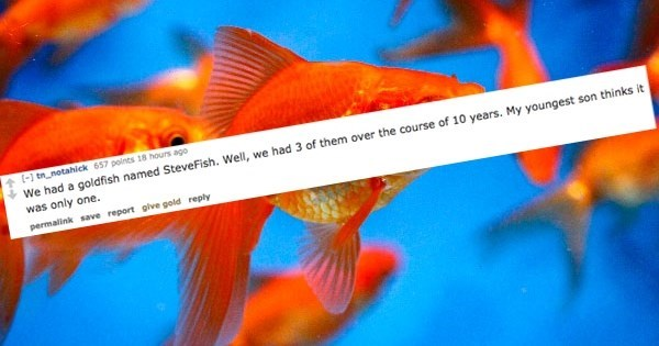 Fish - (- tn notahick 657 points 18 hours ago We had a goldfish named SteveFish. Well, we had 3 of them over the course of 10 years. My youngest son thinks it was only one. permalink save report glve gold reply