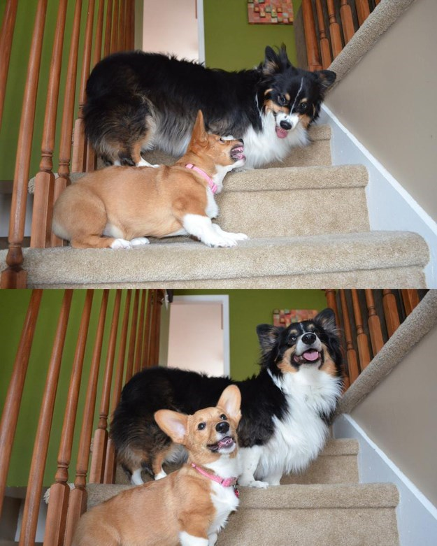 cute dogs image At Least They Stopped Arguing Long Enough to Pose for a Picture