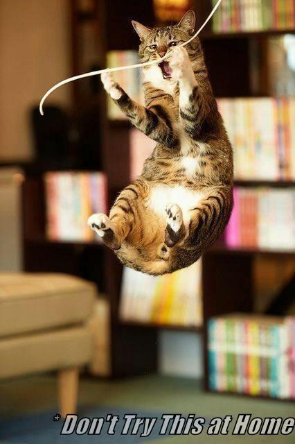 animals stunt Cats dangerous funny - 8575220992