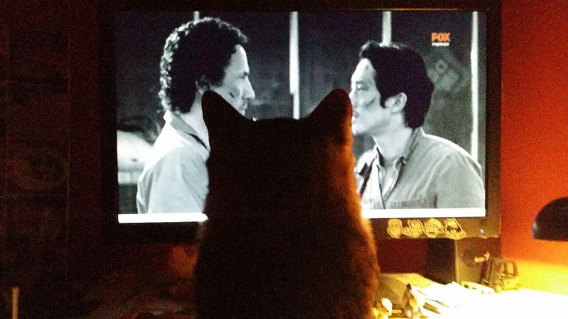 Kitteh Can Has TV on Walking Dead Nights?