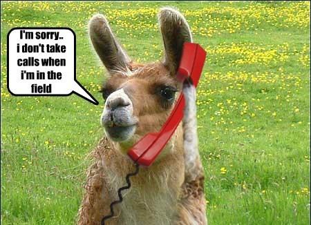 animals llama funny phone