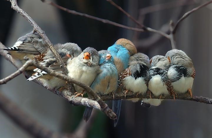cute birds image Everyone Loves Cuddling